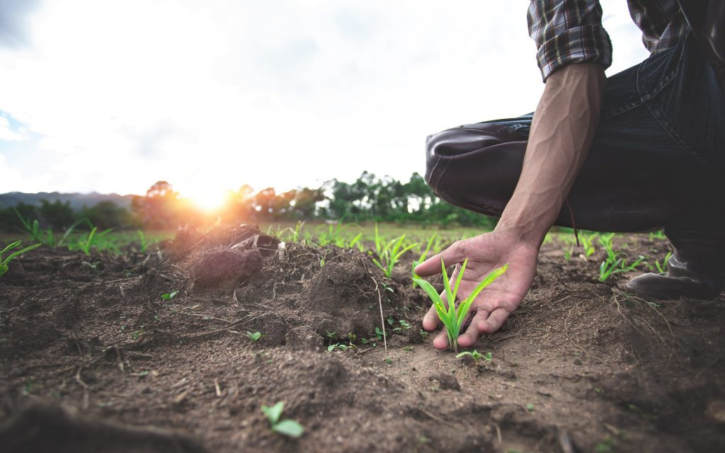 planting-farmland-appraisals-Alberta-Property-DNA-Group-Lethbridge
